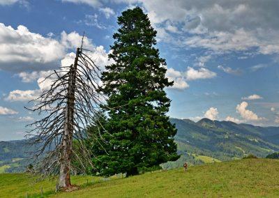Mittwoch: Wandertrilogie – Pfade oberhalb des großen Alpsees