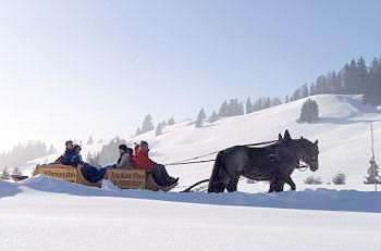 Pferdeschlittenfahrt Am Imberg Oberstaufen Allgaeu
