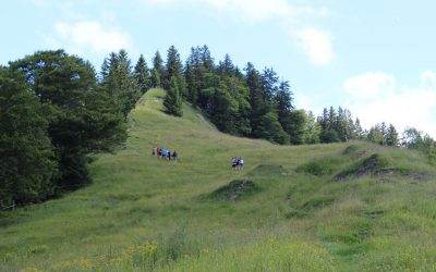 Donnerstag: Waldwege und Jägersteige