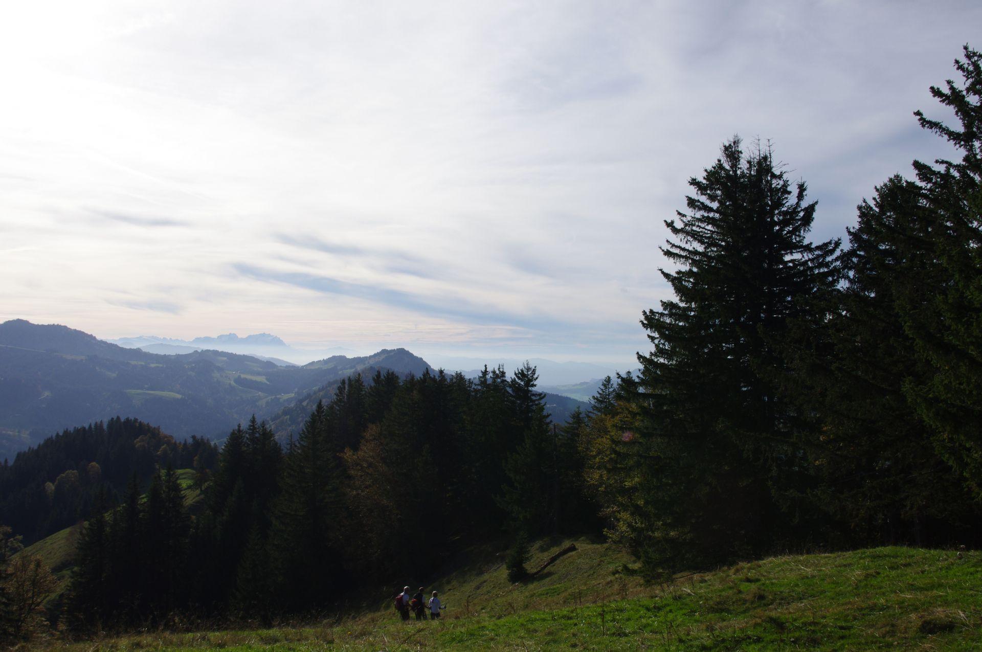 Donnerstag Waldwege Und Jägersteige