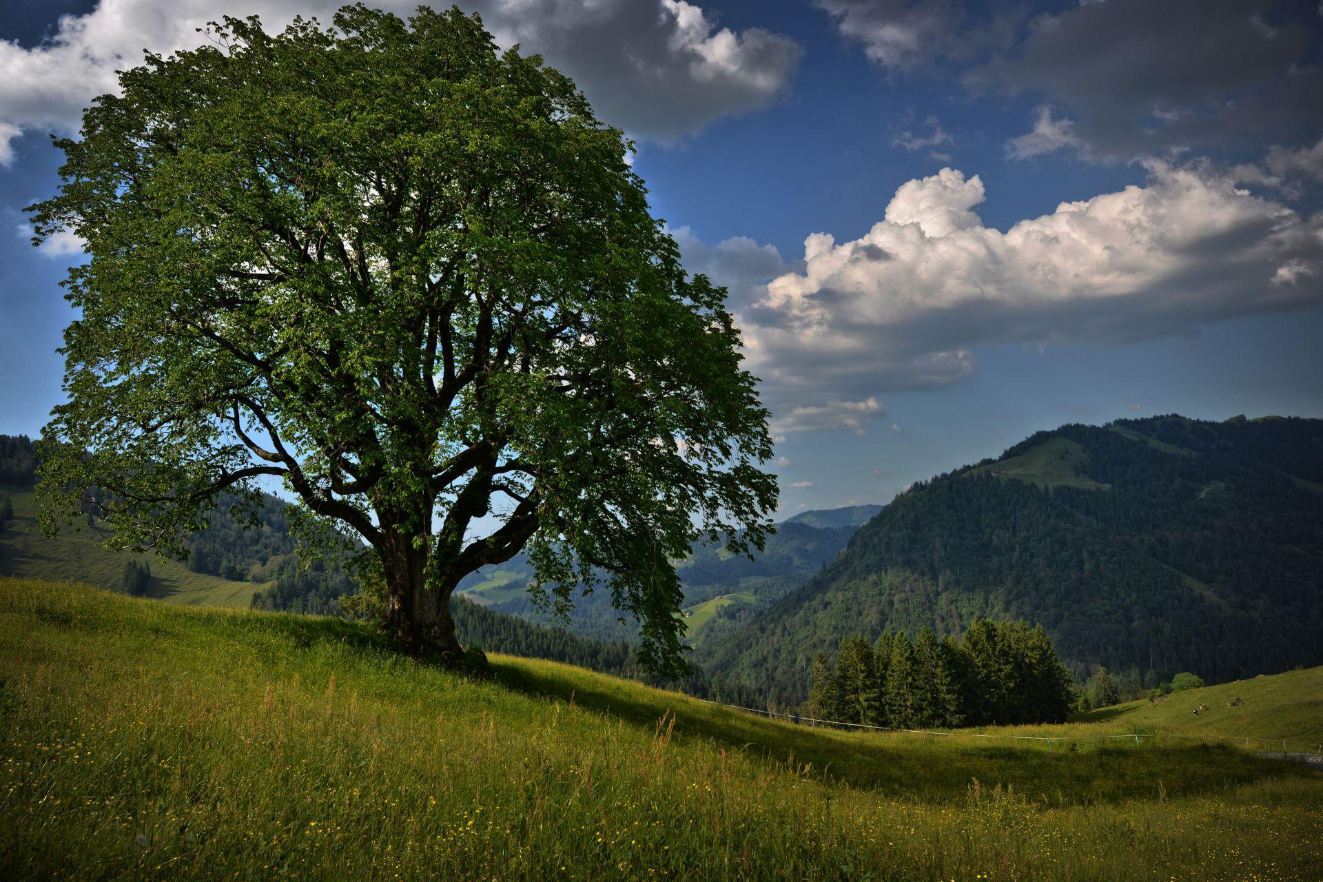 Mittwoch Bäume Tour 3