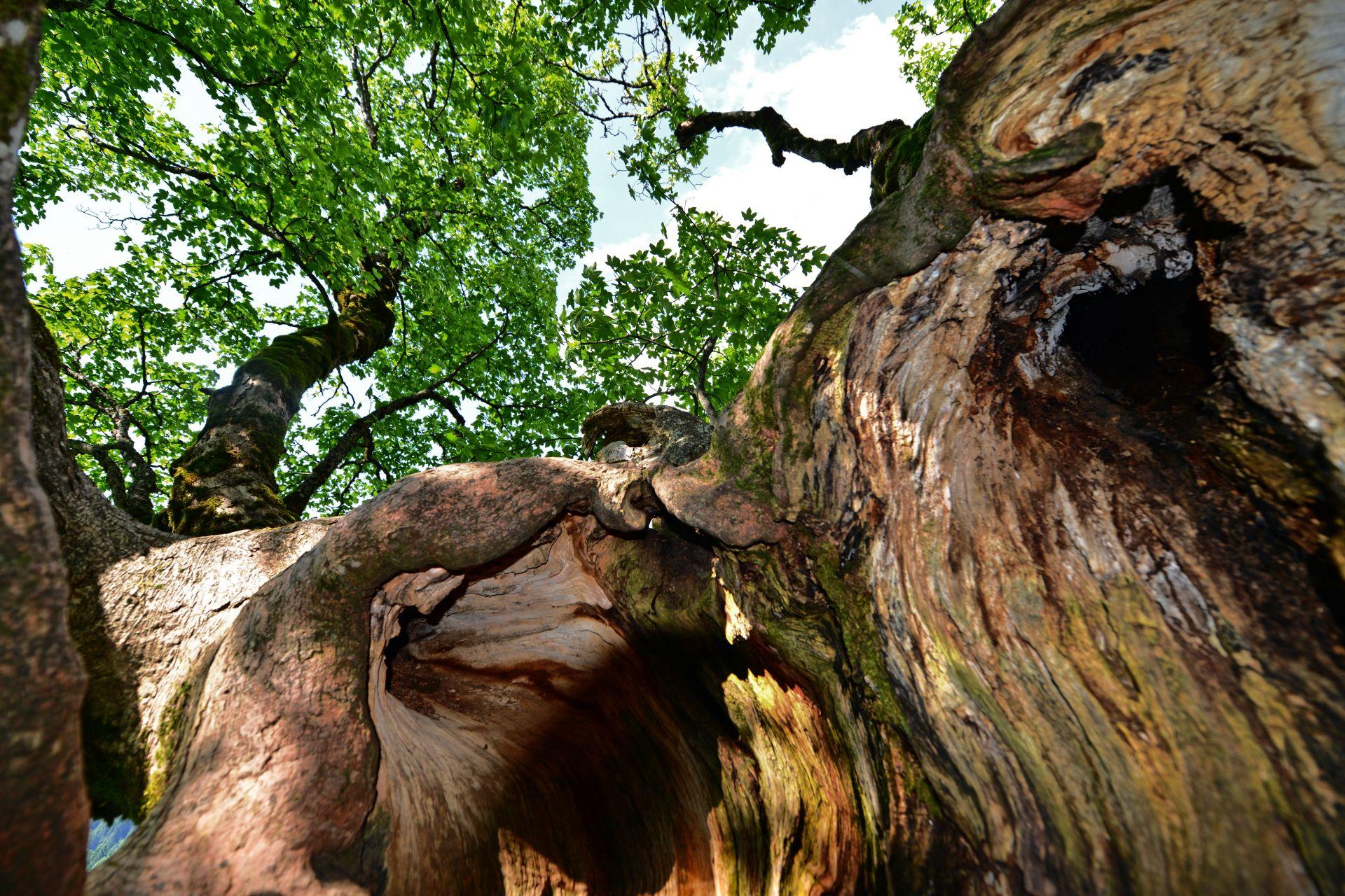 Mittwoch Bäume Tour 4