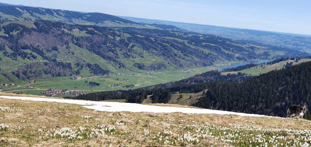 Blick Richtung Alpsee